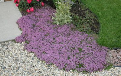 Groundcover Guide