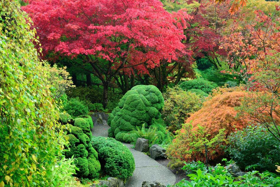 Japanese maple trees farmington gardens for Japanese trees for small gardens