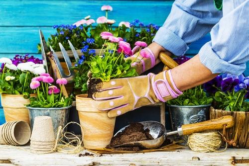 How to Repot Indoor Plants