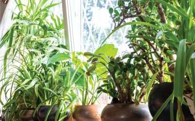 Houseplants! Good for your Health & Home!