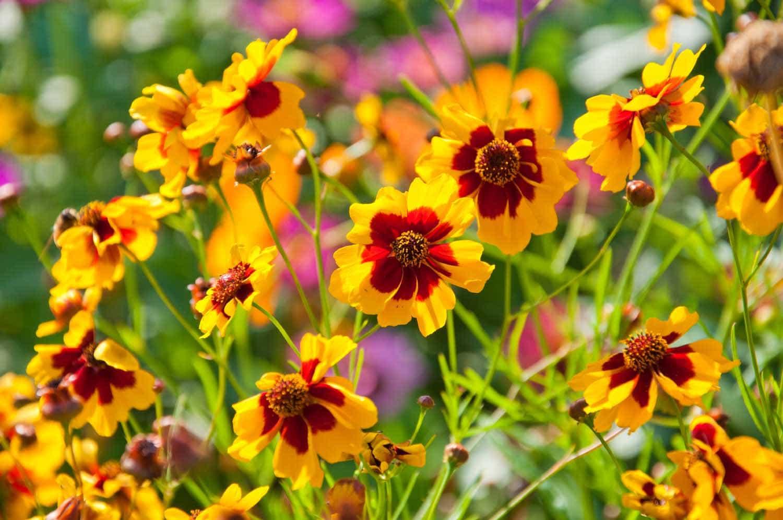Sun Perennials Farmington Gardens