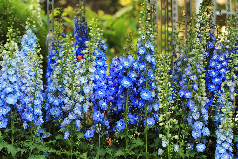 Plants That Attract Hummingbirds Farmington Gardens