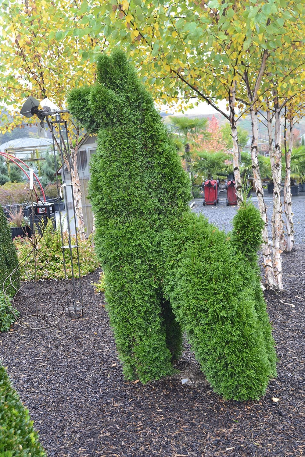 Topiary at the Garden