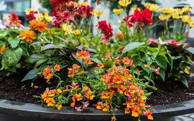 Container Gardening!