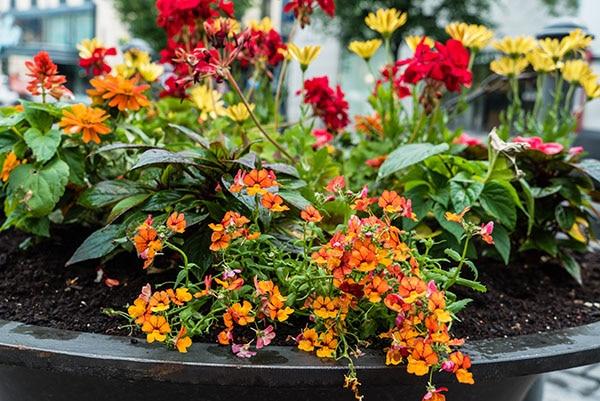 Container Gardening Farmington Gardens