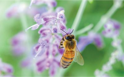 BEE kind to Bees! Pesticides…