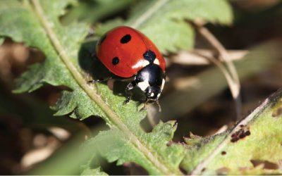 Beneficial Insects!